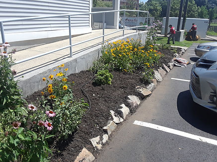 2. After weeding and client mulch.jpg