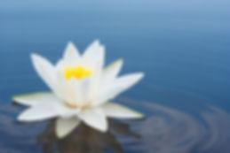 white lily.jpg