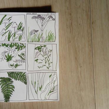 Foliage, Ferns and Fungi