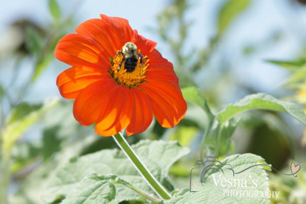 orange flower and bee