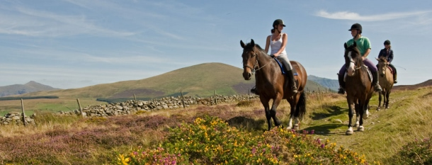 Snowdonia Riding Stables449