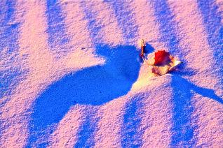 Established White Sands
