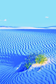 It Finds a Way White Sands