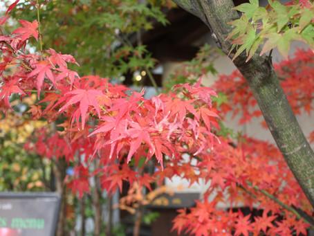 紅葉の秋はすぐそこに