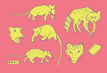 zarigueyas---opossums-.png