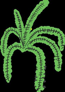 tropical plants _ helecho fern.png