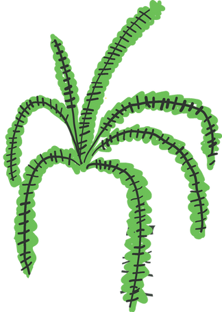 tropical plants _ helecho fern.png