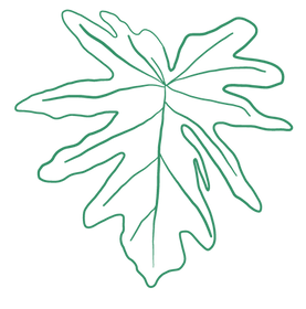 tropical plants_ Filodendro.png