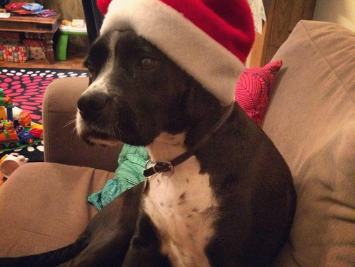 Christmas Foods You Shouldn't Share with Your Dog