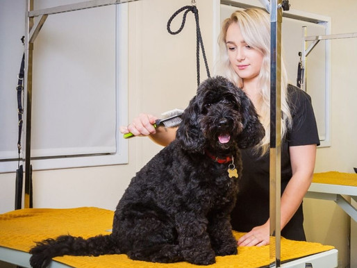 What happens when…. my dog goes to the groomer?