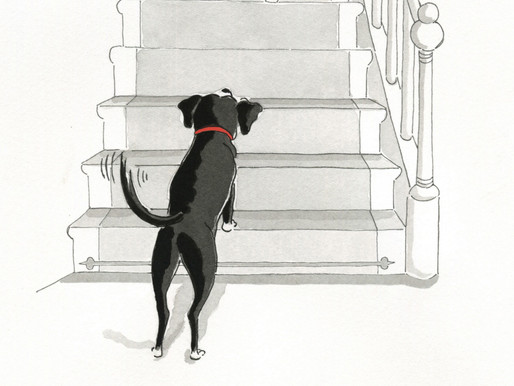 Why do dogs wag their tail?