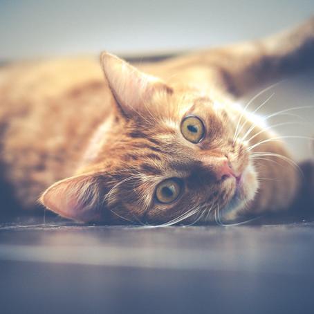 Le chat, le meilleur ami de l'homme ?