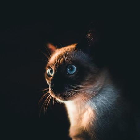 Plonger dans les yeux de son animal