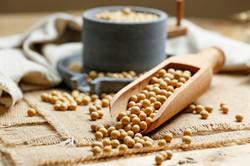 soybeans-wooden-scoop-little-stone-mill_
