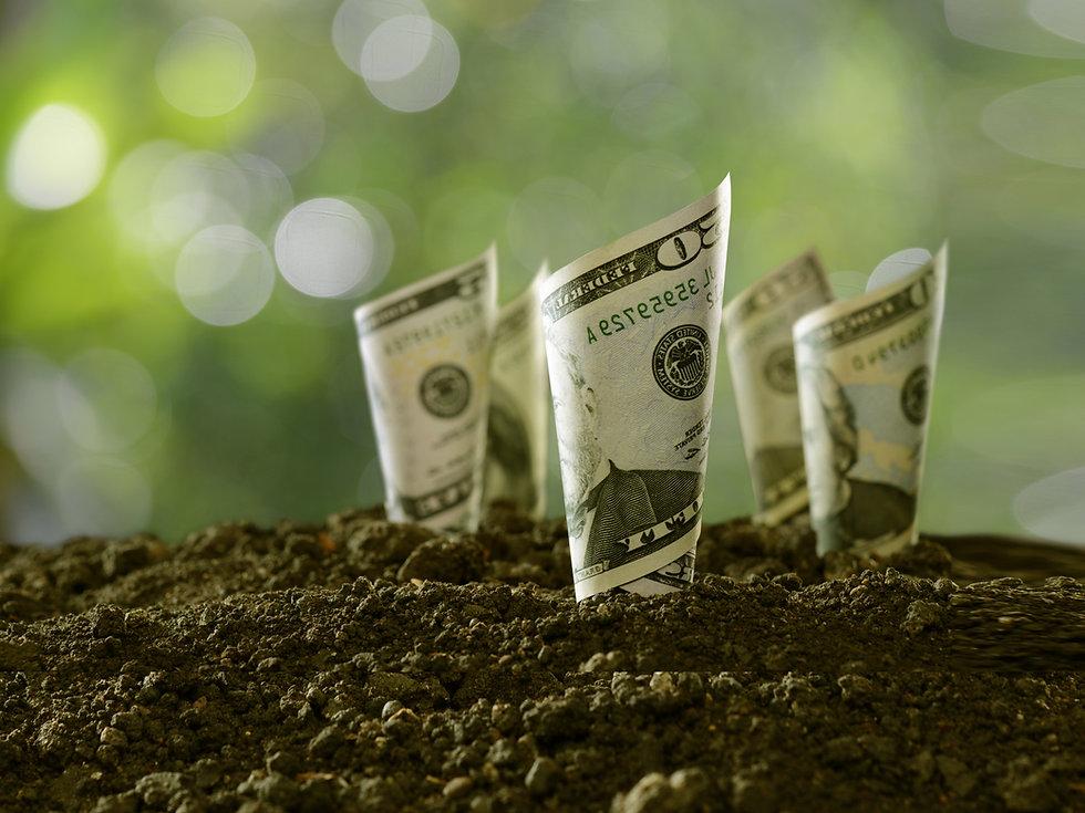 Image of dollar bills growing in dirt