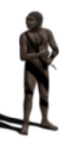Homo erectus drawing
