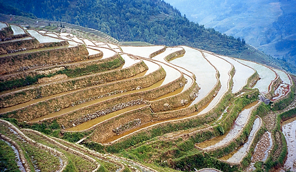 This is a picture of Terrace Farming