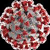 coronavirus image microscope.png