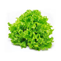 Black Seed Lettuce