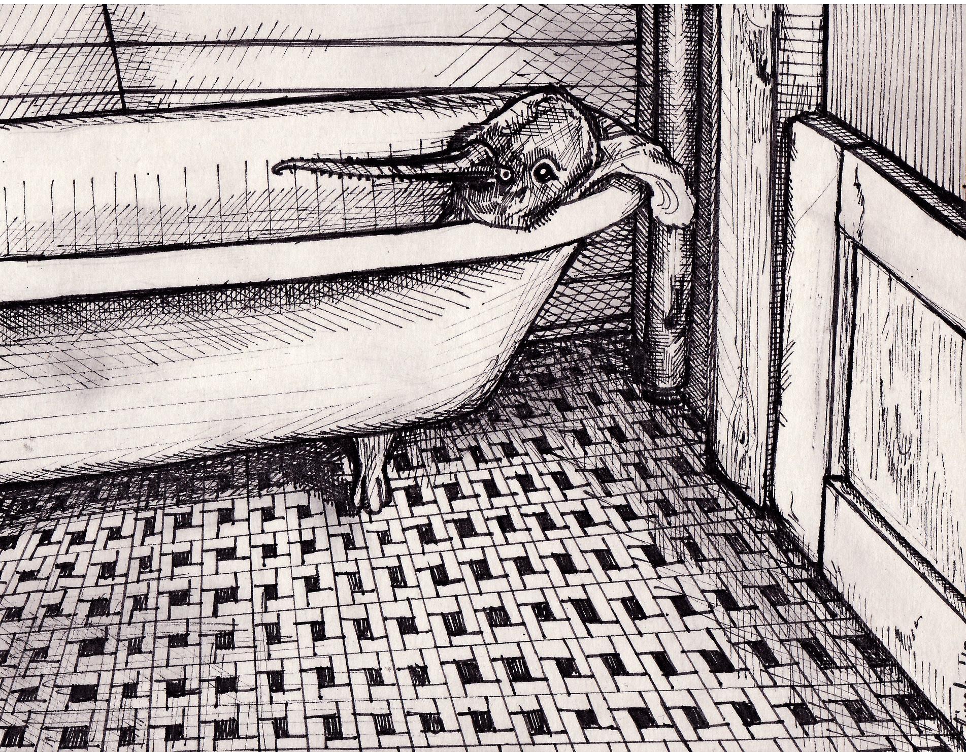 Bird in Tub