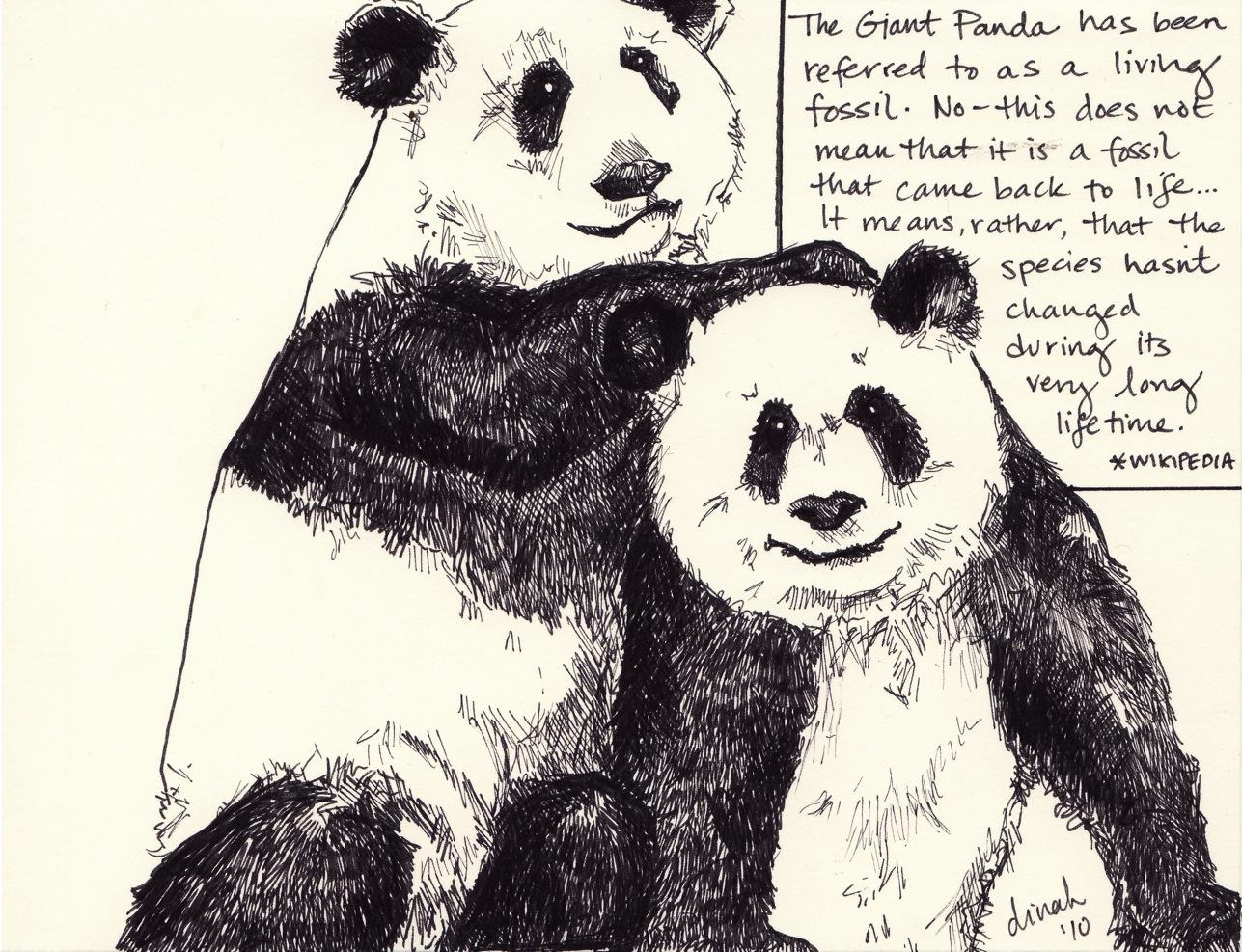 The Panda Pair