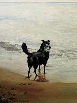 Mosie at the Beach I