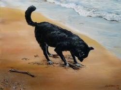 Mosie at the Beach II