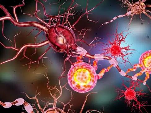 Autoimmunity: How It Develops Over Time
