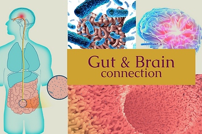 Intriguing_Facts_About_the_Gut_and_Brain