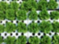 sustainable-farming_t20_v3pepG.jpg