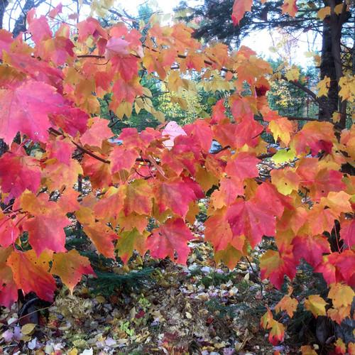 fall-leaves2.jpg