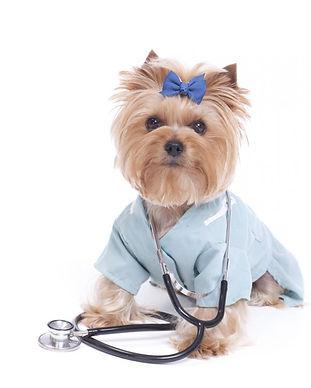 Healthy Pets 1.jpg