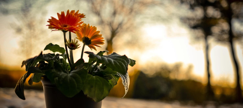 nature-night-sunset-snow-flat-dish-flowers_edited