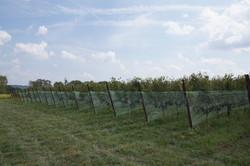 Sugarland Wines & Vines
