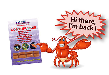 Lobster eggs.jpg
