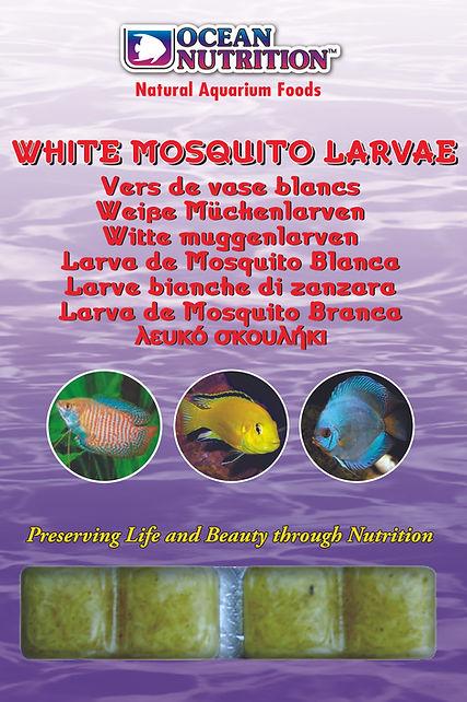 White Mosquito Larvae.jpg