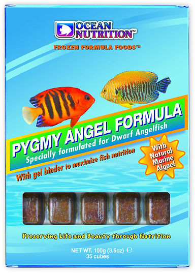 Pygmy Angel.jpg