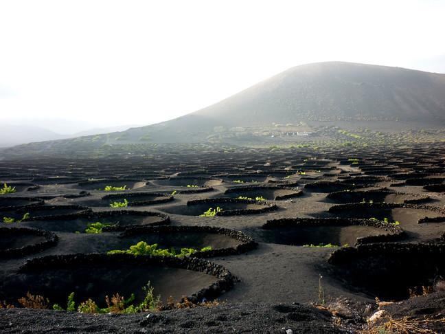 Vitigni vulcanici