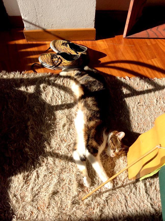 Gigia under the sun