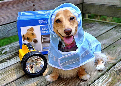 hurricane-prep-for-pets.jpg