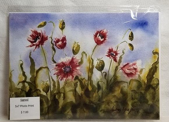 Photo Print 5x7 #FPF-5 - Poppies