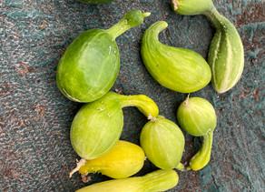 Sulking Cucumbers