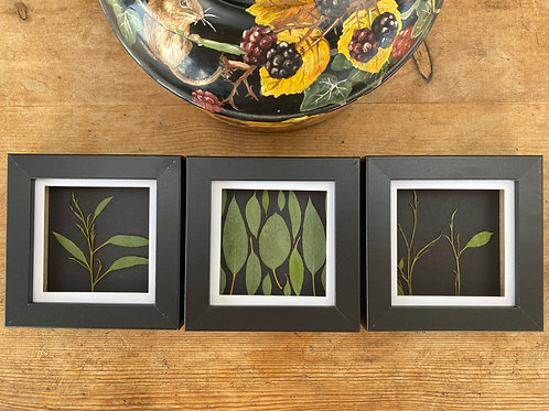 Pressed Flower Wall Art, Set of 3