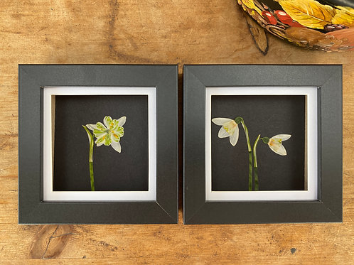 Pressed Flower Wall Art, Set of 2