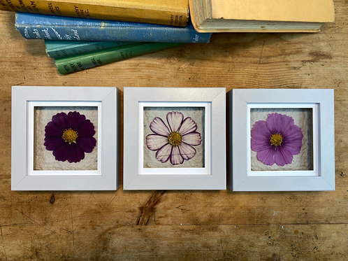 Pressed Flower Wall Art, Set of 3