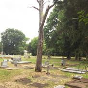 Many dead trees create a safety hazard.