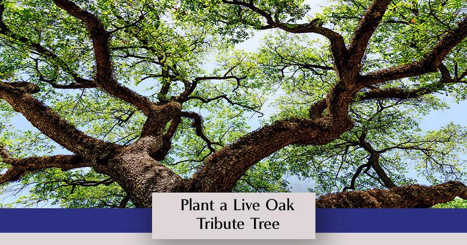 Plant a Live Oak Tribute Tree Photo.jpg