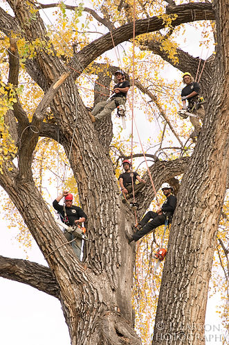 tree removal spearfish, tree trimming spearfish, certified arborist South dakota, certified arborist spearfish