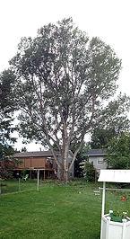 tree removal spearfish, tree trimming spearfish, certified arborist South dakota, certified arborist spearfish