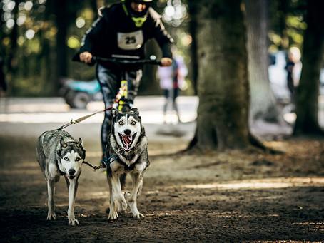 Gesund Mit Hund, Tierpark Ströhen 2020